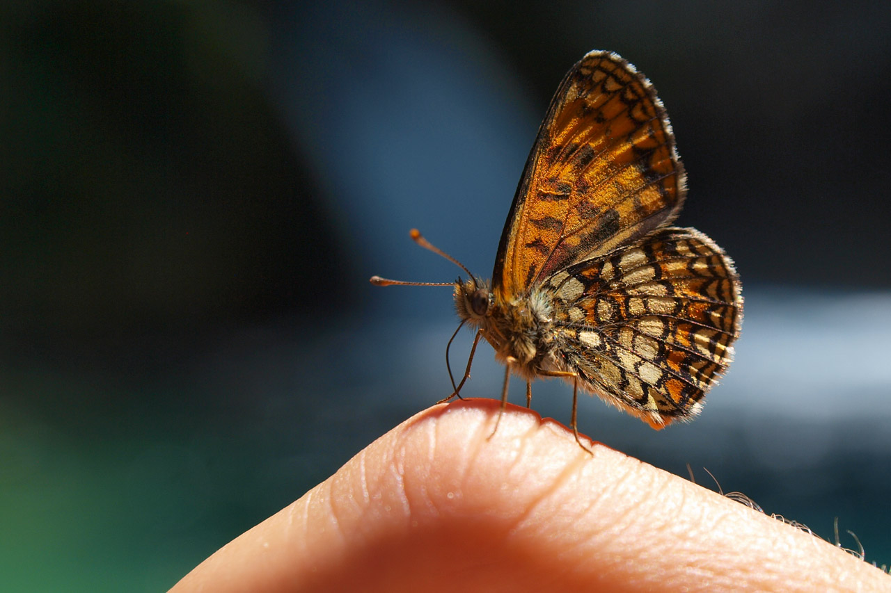 Butterflies are our frequent visitors at the Syri i Kalter