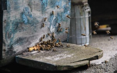 Villagers keep bees for fresh honey