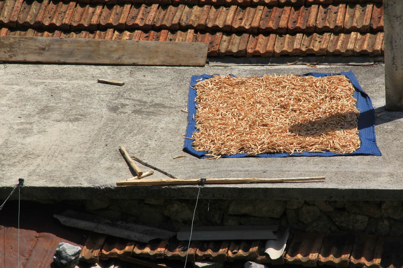 Beans drying on a roof in Tamara