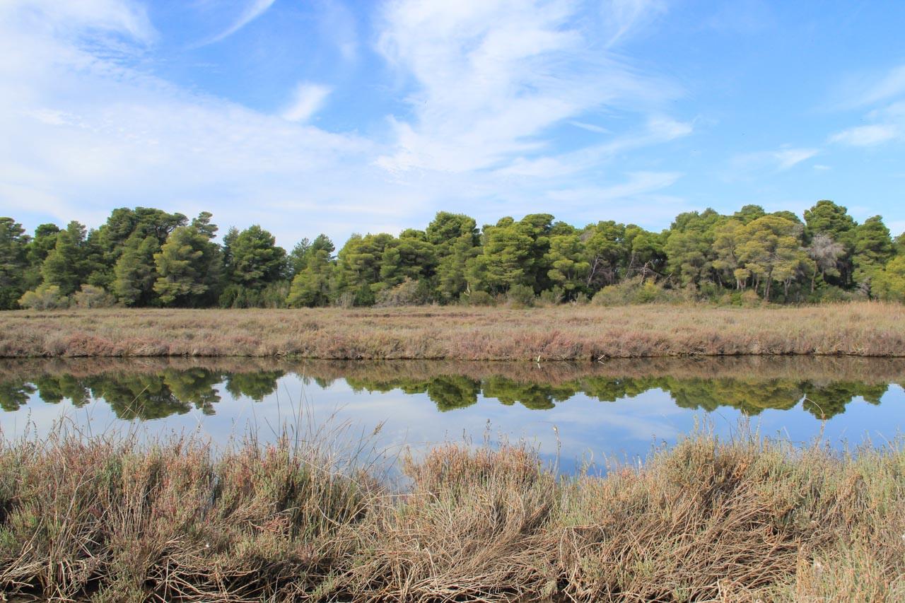 Karavasta and the surrounding lagoons are home to many aquatic bird species