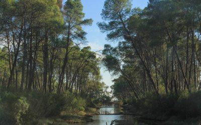 Arrival at Karavasta Lagoon